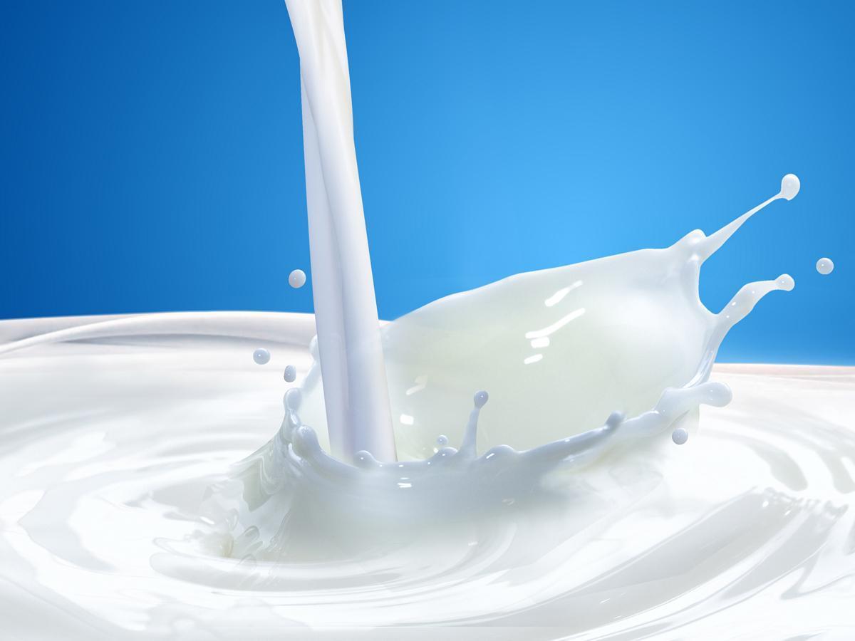 Maitoa kaadetaan